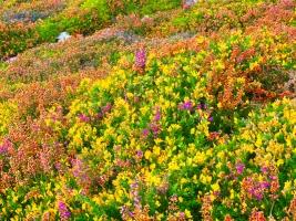 Bretagne Herbstflor