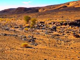Steine in der Wüste