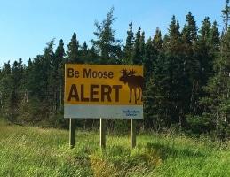 Moose Alert