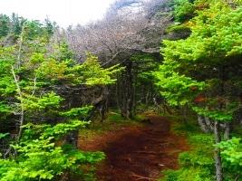 Forest wild
