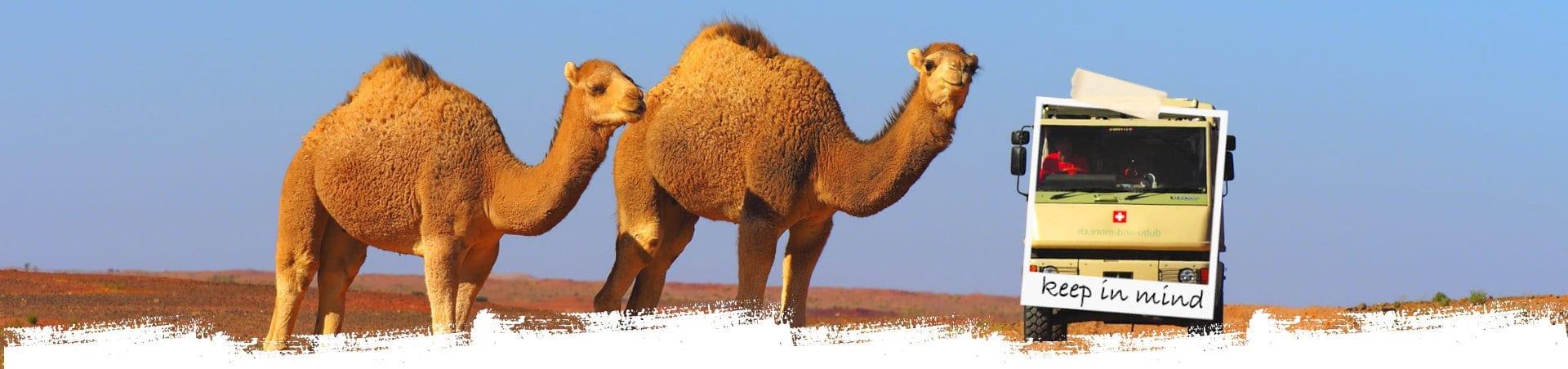 Marokko Dromedar